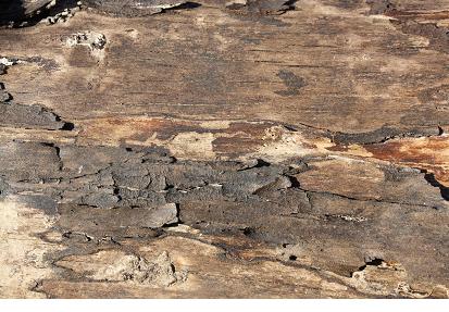 שתפו את הגולשים במקורות ההשראה לאמנות שלכם. קליפת עץ שצילמתם ברחוב, לדוגמה.