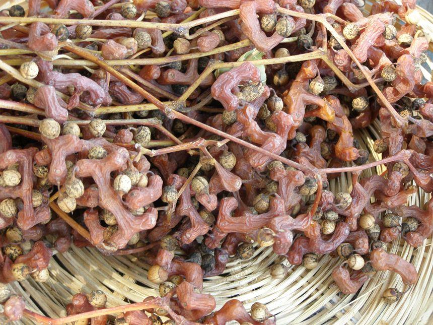 פרי צימוק יפני